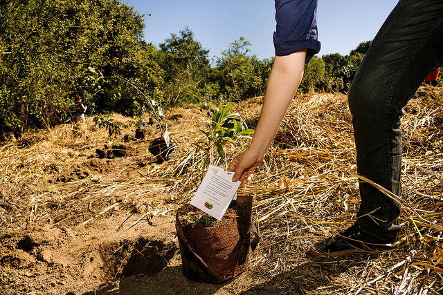 Cómo llevar la restauración del paisaje forestal al siguiente nivel