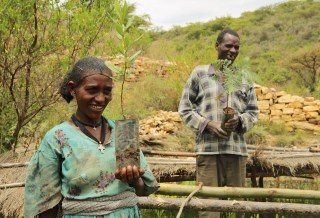 Ethiopia's new forestry law: A win for landscapes and livelihoods?