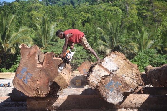 solomon islands, deforestation