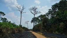 El potencial del enfoque jurisdiccional para enfrentar la deforestación tropical
