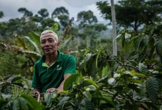 Taking stock of Indonesia's social forestry program