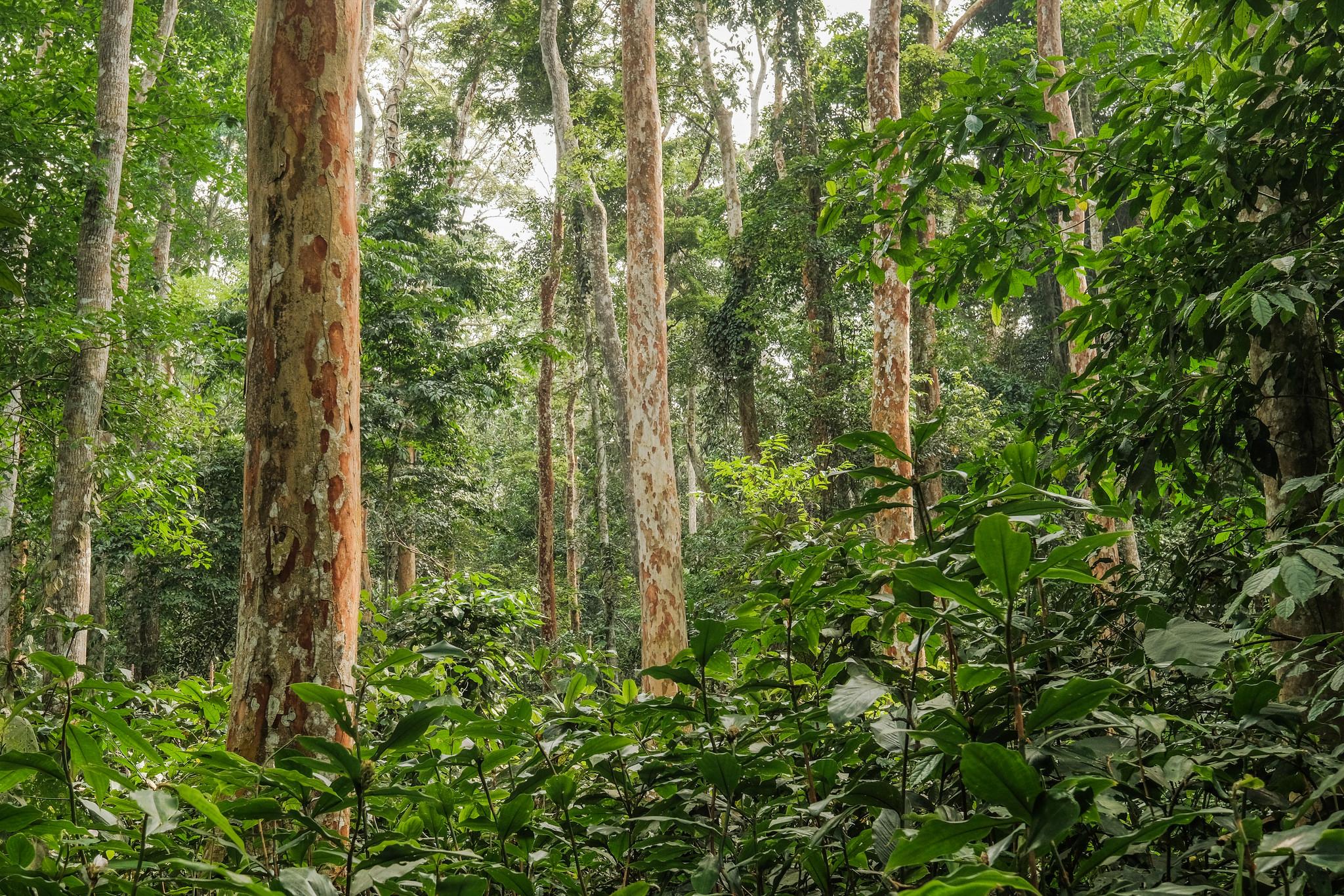 De la recherche à l'action pour protéger les forêts du bassin du Congo