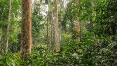 From research to action to protect the Congo Basin forests