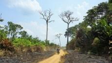 REDD+: El camino, a veces sinuoso, hacia el cambio transformacional