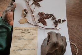 Hands organise old and rare botanical collection, Central Africa's largest, in Yangambi's herbarium, Democratic Republic of Congo (DRC)