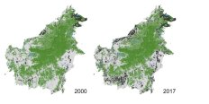Permalink to: Is deforestation in Borneo slowing down?