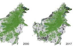 New maps of Borneo reveals expansion of industrial oil palm and pulpwood plantations (black) and forest loss (green to another color) every year since year 2000 until 2017. Green to white= forest loss, green to black= forest cleared and converted to plantations in the same year, green to blue= forest permanently flooded by hydropower dams (see in the state of Sarawak, Malaysia).