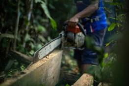 chainsaw, smallholders, palm oil, oil palm, indonesia, peatlands, deforestation, local government , Borneo