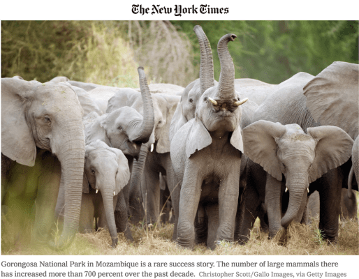 elephants, national park, mozambique, africa, conservation