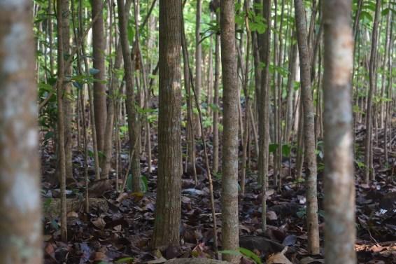 valentine's day, mahogany , mahogany woods