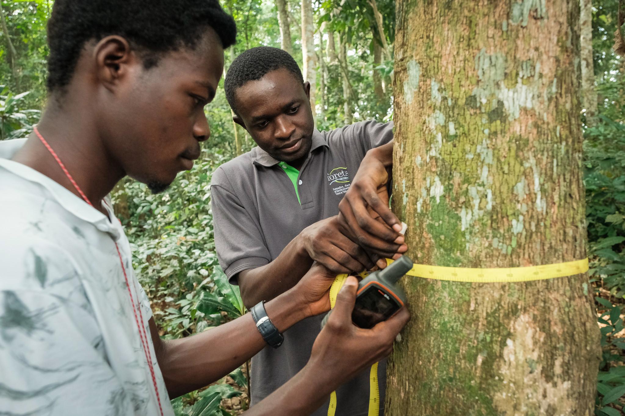 À la découverte des secrets des arbres tropicaux