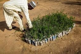 refugee, nigeria, boko haram, refugee, landscape restoration, tree planting, planting trees, Ethiopia restoration, Ethiopia, africa