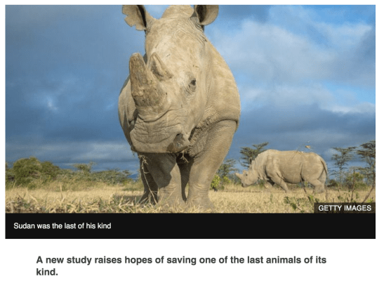 northern white rhino, sudan, IVF, extinction, iucn, bbc
