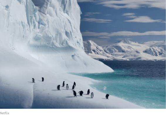 penguins, netflix, our planet
