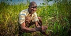 Permalink to: DRC landscape restoration is electrifying!