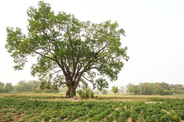 La perte de terres agricoles au profit d'un parc national