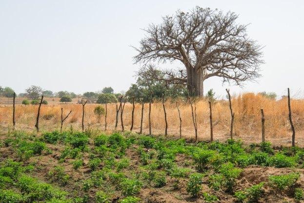 Le changement climatique, la dégradation des terres et la disparition des arbres ont des conséquences catastrophiques sur les récoltes