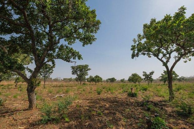 La question du genre, la pénurie de terre et le manque d'accès aux arbres au Ghana