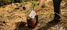 Permalink to: 'Forget tree planting, start tree growing'