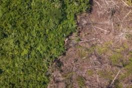 deforestation, DRC, REDD+, research methods, lieki, Democratic Republic of the Congo, Congo basin
