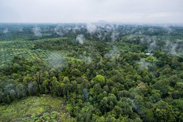 Kearifan massa: 20 pertanyaan teratas tentang hutan dan