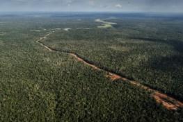 Papua, Indonesia Papua, Papua deforestation, Papua road, Papua highway, Papua Atlas