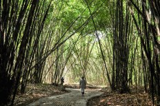 Permalink to: What bamboo forests do for nature and human well-being