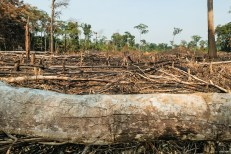 Permalink to: CIFOR and ICRAF join 11,000 scientists to declare 'climate emergency'