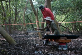 Scientists work in a swampy mangrove forest to measure carbon