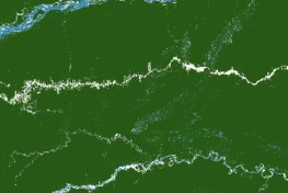 Satellite image of forest