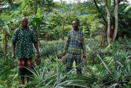 Two men stand in a forested area holding pineapples