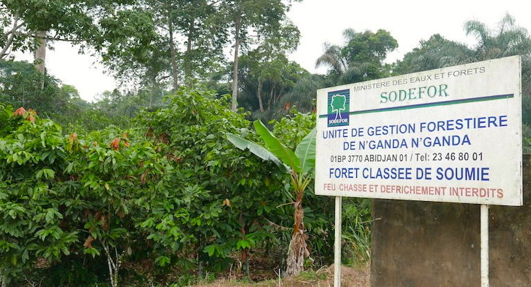 A sign is shown on the roadside by cocoa trees