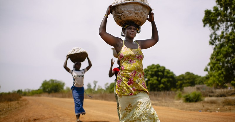 Women carry baskets full of cotton on their heads along a road