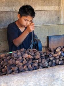 Brazil nut harvesting. Photo: Gabriela Ramirez Galindo/CIFOR