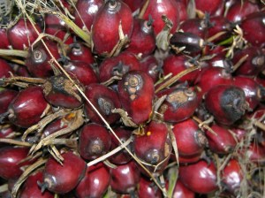 RS34382_Oil Palm fruits Kutai Barat Ch Goenner 2005-scr