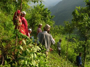 Nepalese countryside: FTA research looks at people in the landscape. Photo: Adrian Albano/CIFOR