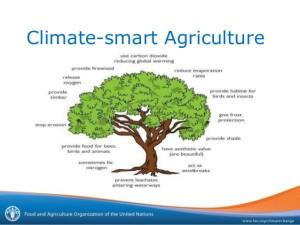climatesmart-agriculture-1-638