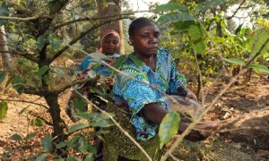 Empowering women benefits the forestry sector. Photo: Simon Maina/FAO