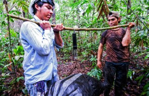 The villagers try to make a living from all forest products. Photo: Marco Simola/CIFOR