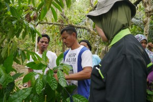 cocoa agroforestry