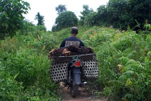 How will smallholder farmers get access to sustainable financing? Photo: Iddy Farmer/CIFOR