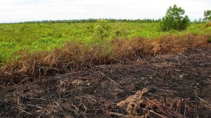 Land cleared by swidden in Central Kalimantan, Indonesia. Photo: Yayan Indriatmoko/CIFOR