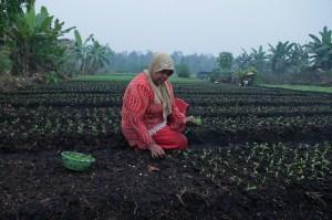 Farmers say that smoke from the fires are disrupting their harvests. Palangka Raya, Central Kalimantan. Photo: Aulia Erlangga/CIFOR