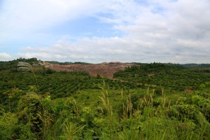 Oil palm production is changing nature in East Kalimantan as well. Photo: Mokhamad Edliadi/CIFOR