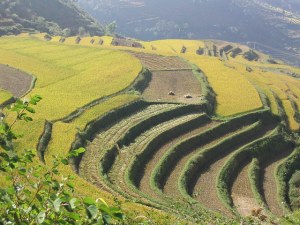 Looking at the whole landscape may help promote CSA. Photo: ICRAF