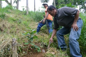 Ardenio Lozano, a farmer in Lantapan, Bukidnon province of the southern Philippines, has planted more trees to enhance water flow. Photo: World Agroforestry Centre/Amy Cruz
