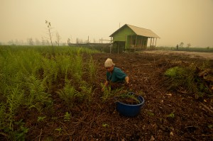 Farmers have to tend to their land in the haze, here Palangka Raya, Central Kalimantan. Photo: Aulia Erlangga/CIFOR P
