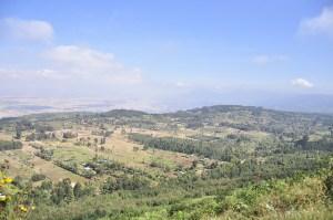 Agroforestry near Nairobi, Kenya. Photo: World Agroforestry Centre