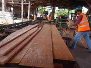 Timber harvesting, processing and sale in Guatemala has conserved the forest and mahogany trees of the Maya Biosphere Reserve. Credit: Bioversity International/L. Snook