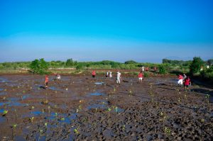Planting Mangroves. Photo: Putu Budhiadnya for 2016 Global Landscapes Forum Photo Competition